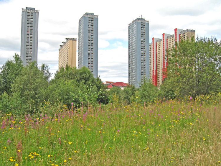 A3-1 urban biodiversity