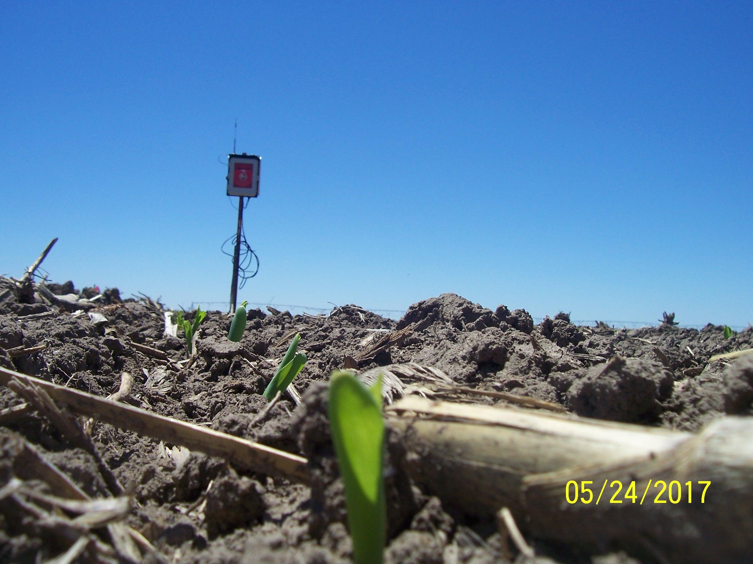 C-1 (Corn) SE4 16-31s-37w 5242017 100_3369
